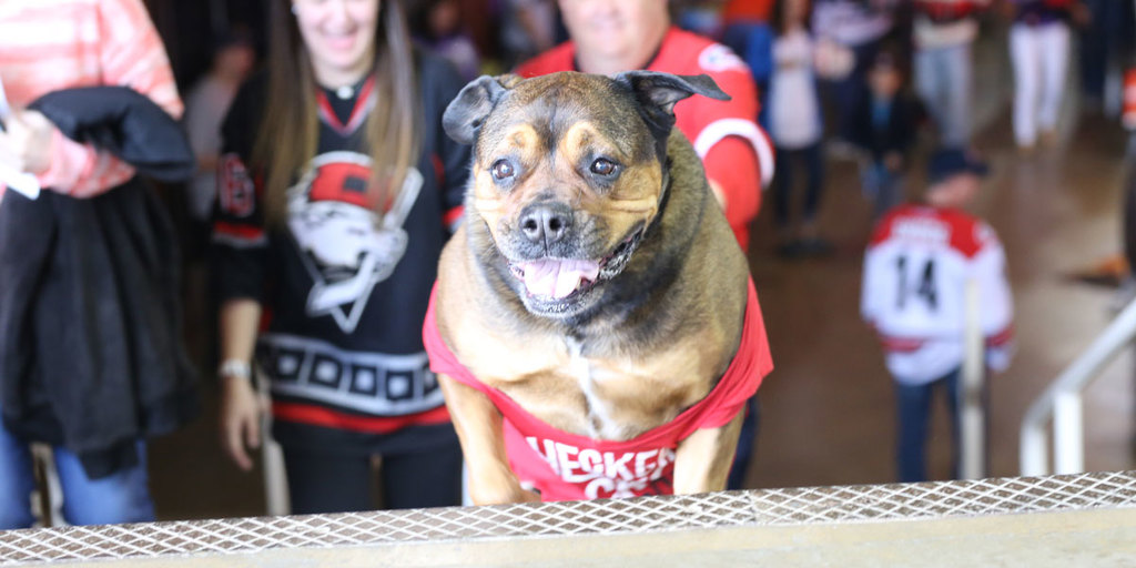 Charlotte Checkers Pooch Party