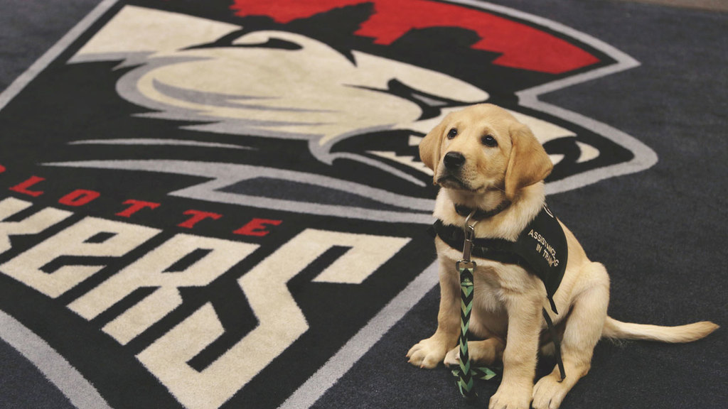 Charlotte Checkers to Help Train Puppy from Project2Heal